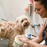 Séance de toilettage pour chien