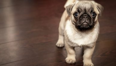 Dressage de son chien: comment procéderavec un collier spécifique ?