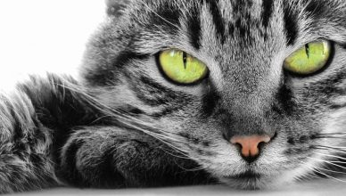 telepathie animaux chat