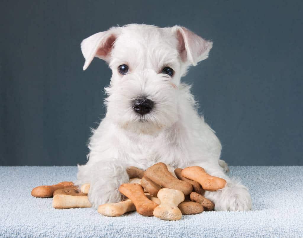 croquettes pour les chiens